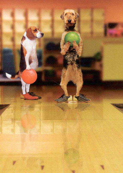 super%20funny%20animals%20cute%20photos_Bowling%20Dogs[1]